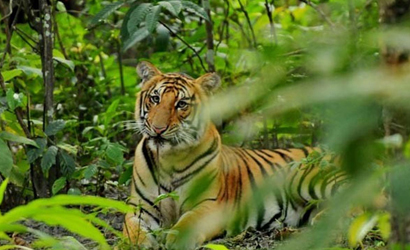 Bardia Wildlife Safari Tours